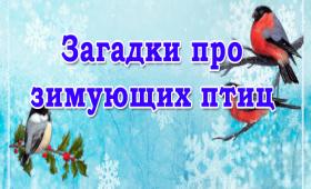 Детские загадки про зимующих птиц