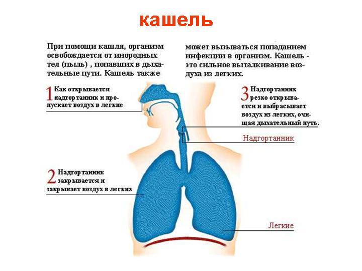 Почему вечером начинается кашель