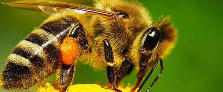 Что делать, если ребенка укусила пчела или оса?