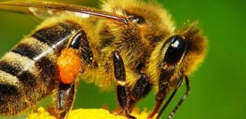 Первая помощь ребенку при укусе пчелы